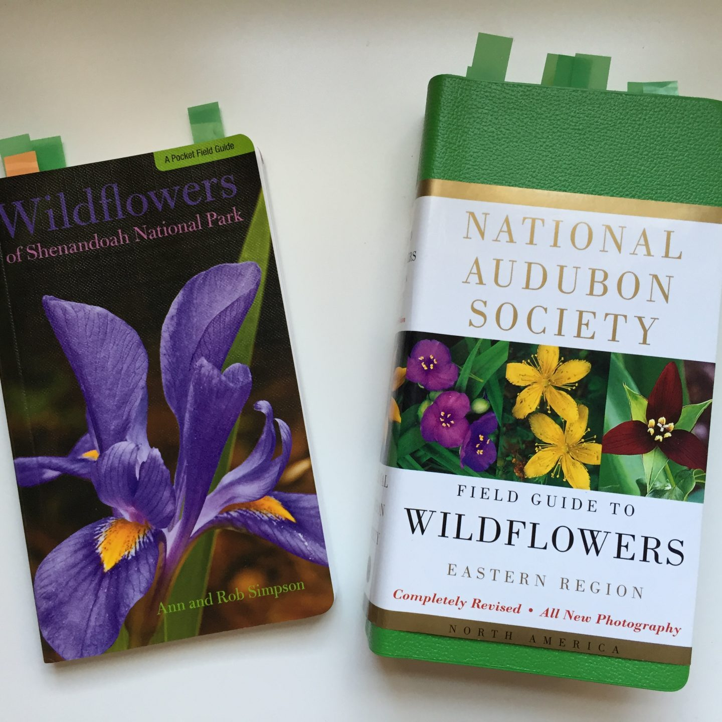 How to Identify the Wildflowers in Shenandoah National Park