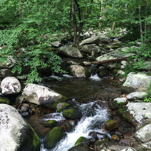 Nicholson Hollow Trail