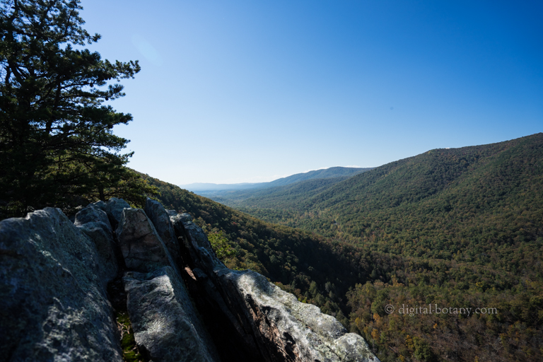 George Washington National Forest – Buzzard Rock