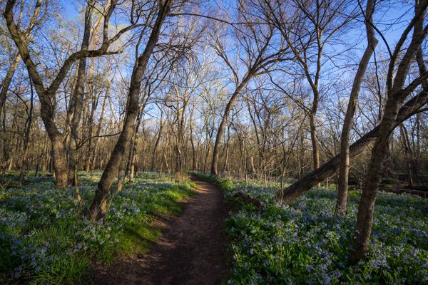 Bull Run Regional Park – Bluebell Trail