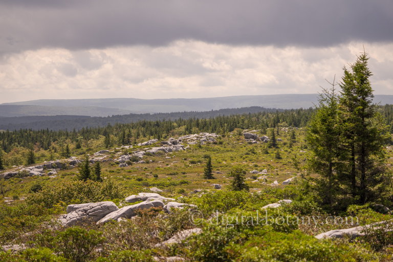 Dolly Sods Wilderness – Backpacking Dolly Sods North Loop