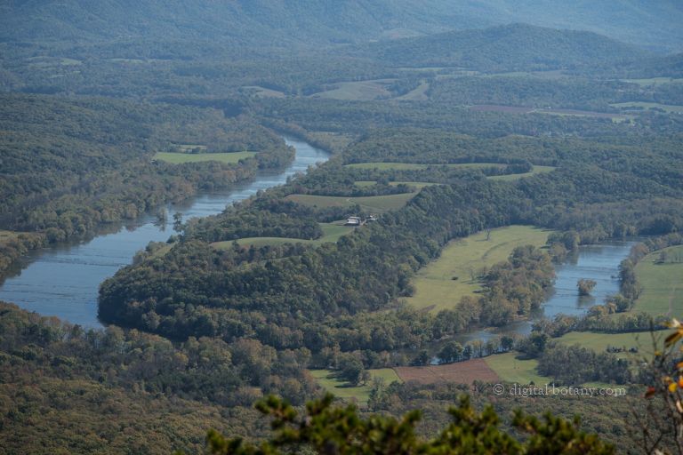 Shenandoah River from Veach Gap Trail