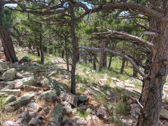 Hogback Ridge summit