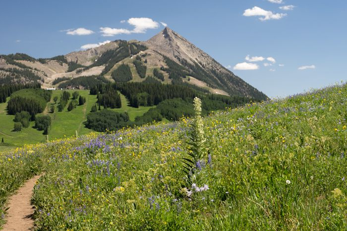 Crested Butte wildflowers Snodgrass Mountain trail