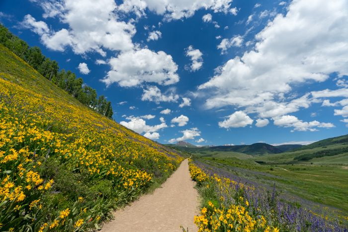 Crested Butte Brush Creek Trail wildflowers
