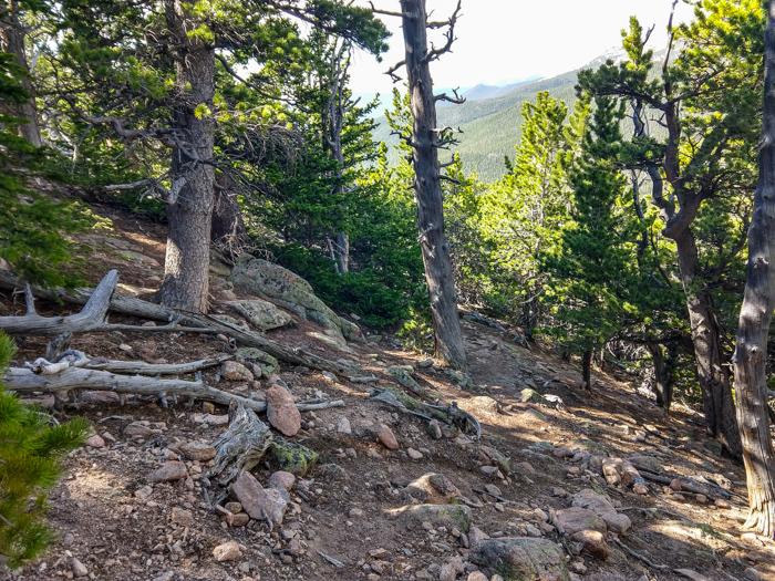 Estes Cone Trail