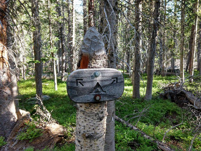 Upper Chipmunk Campsites