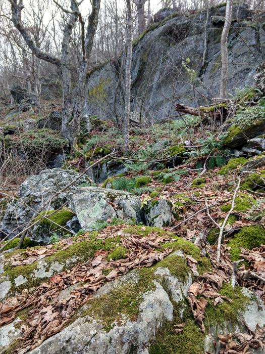 Shenandoah Appalachian Trail moss