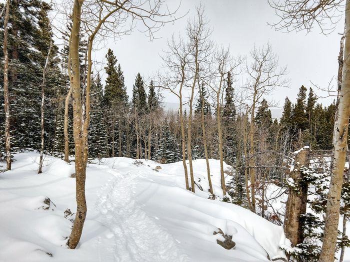Glacier Gorge Trail winter aspens
