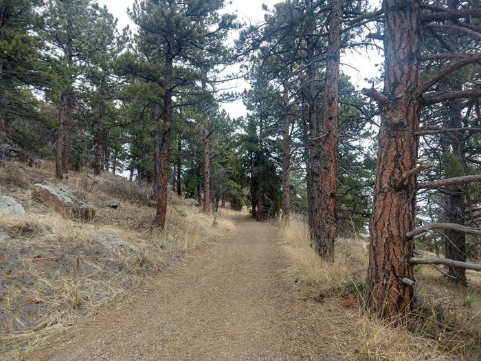 The Mesa Trail Ponderosa Pine forest