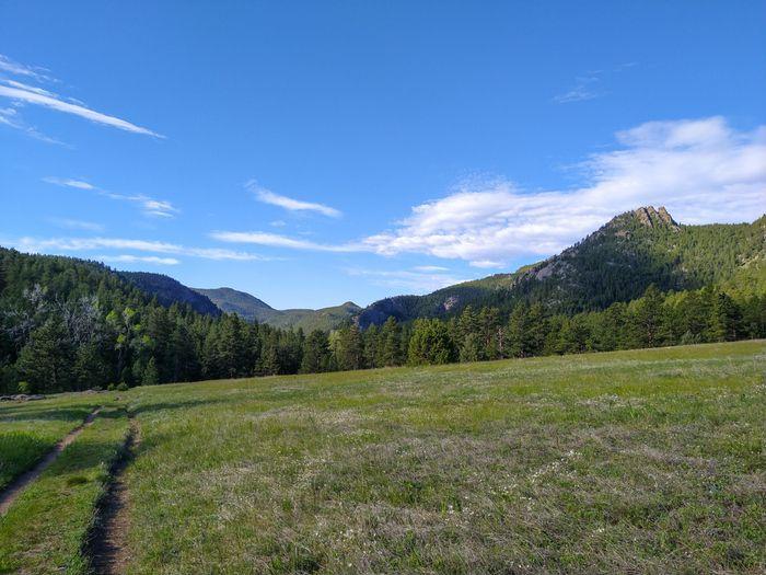 Coulson Gulch Trail meadow