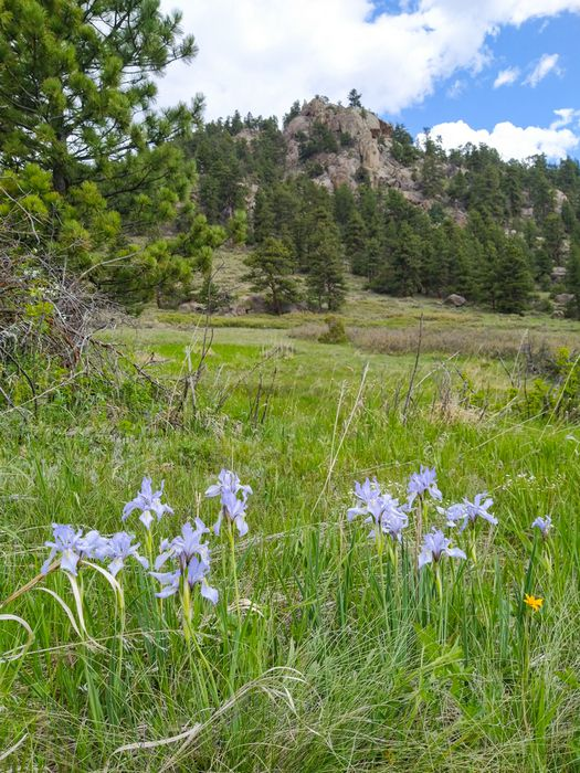 Johnny Park Shortcut Trail Wild Iris