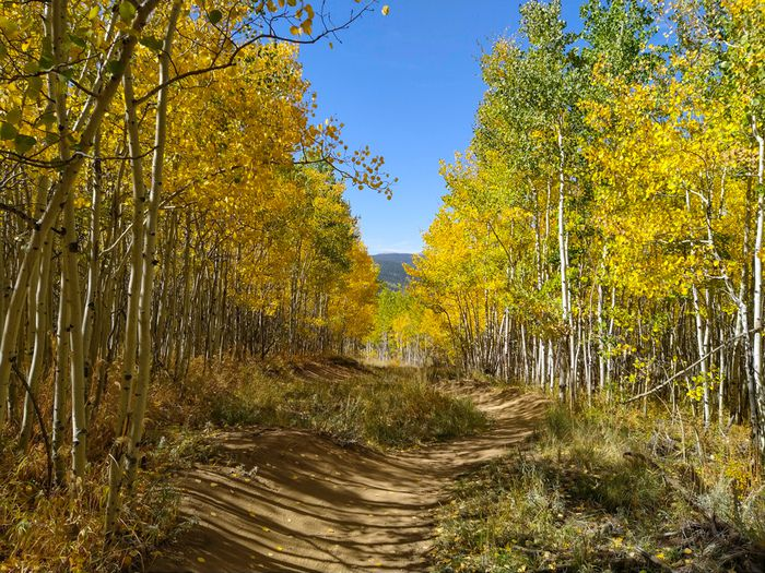 Nederland – Aspen Alley in Autumn